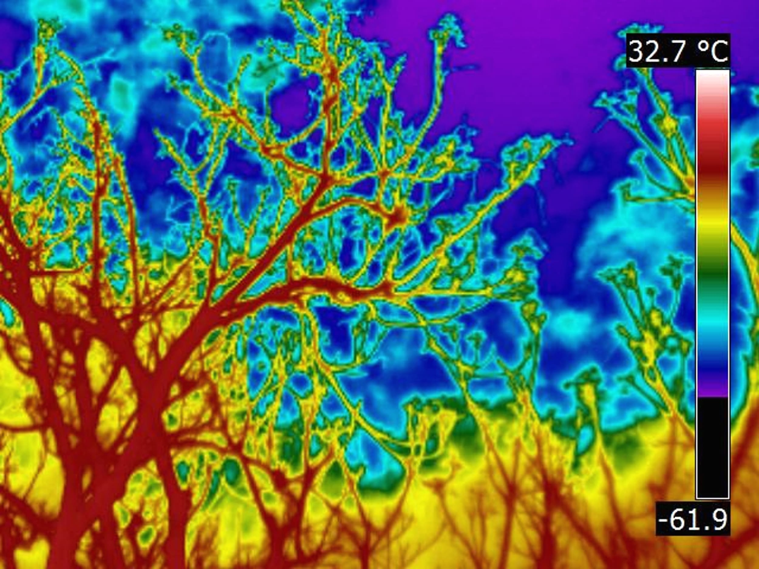 Thermal Imaging Systems in wild nature watching